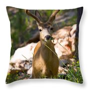 Beautiful Buck In The Pike National Forest Throw Pillow
