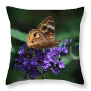 Beautiful Buckeye Throw Pillow