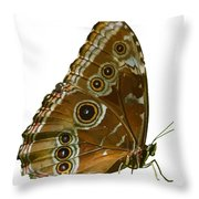 Beautiful Butterfly Wings Of Meadow Brown Isolated Throw Pillow