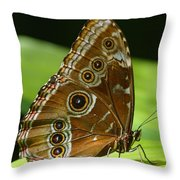 Beautiful Butterfly Wings Of Meadow Brown Throw Pillow