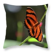 Beautiful Color Patterns To An Oak Tiger Butterfly  Throw Pillow