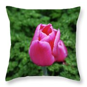 Beautiful Dark Pink Tulip Flower Blossom In A Garden Throw Pillow