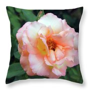 Beautiful Delicate Pink Rose On Green Leaves Background. Throw Pillow