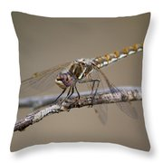 Beautiful Dragonfly Throw Pillow