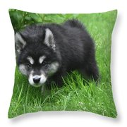 Beautiful Face Of A Black And White Alusky Puppy Throw Pillow