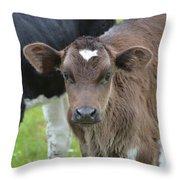 Beautiful Face Of A Brown Calf Throw Pillow