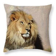 Beautiful Face Of A Lion In The Warm Sunshine Throw Pillow