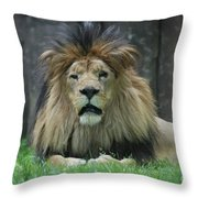Beautiful Face Of A Male Lion With A Thick Fur Mane Throw Pillow