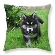 Beautiful Face Of An Alusky Puppy Dog In Thick Green Grass Throw Pillow