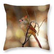 Beautiful Female Cardinal Throw Pillow