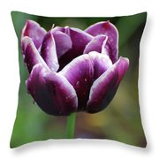 Beautiful Flowering Purple Tulip Flower Blossom In Spring Throw Pillow