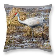 Beautiful Day For A Walk -sandhill Crane   Throw Pillow