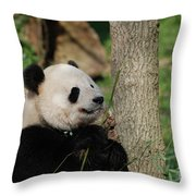 Beautiful Giant Panda Bear In The Wild Throw Pillow