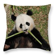 Beautiful Giant Panda Eating Bamboo From The Center Throw Pillow