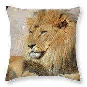 Beautiful Golden African Lion Relaxing In The Sunshine Throw Pillow