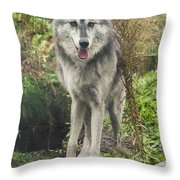 Beautiful Gray Wolf Throw Pillow