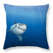 Beautiful Great White Throw Pillow by Dave Fleetham - Printscapes