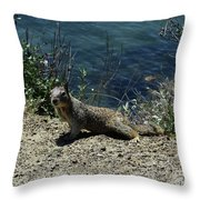 Beautiful Ground Squirrel Standing At The Edge Of The Coast Throw Pillow