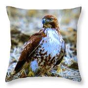 Beautiful Hawk Throw Pillow