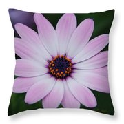 Beautiful In Pink Today Throw Pillow