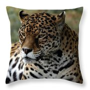 Beautiful Jaguar Portrait Throw Pillow