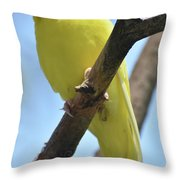 Beautiful Little Yellow Budgie Bird In Nature Throw Pillow