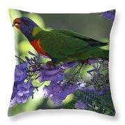 Beautiful Lorikeet Throw Pillow