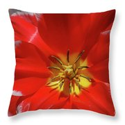 Beautiful Macro Of A Red Blooming Tulip Throw Pillow