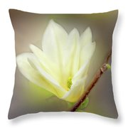 Beautiful Magnolia Original Painting 01 By H G Mielke Throw Pillow