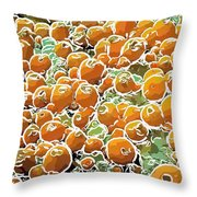 Beautiful Marine Plants 3 Throw Pillow by Lanjee Chee