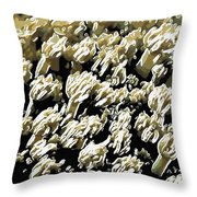 Beautiful Marine Plants 4 Throw Pillow by Lanjee Chee