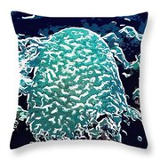 Beautiful Marine Plants 7 Throw Pillow by Lanjee Chee