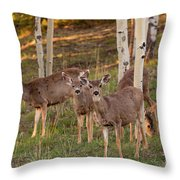 Beautiful Mule Deer Herd Throw Pillow