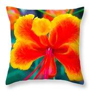 Beautiful Peacock Flower 3 Throw Pillow