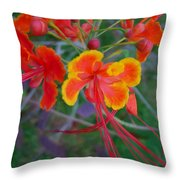 Beautiful Peacock Flower 5 Throw Pillow