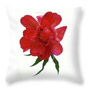 Beautiful Peony Flower. Throw Pillow