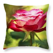 Beautiful Pink Rose Blooming In Garden Throw Pillow