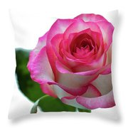 Beautiful Pink Rose With Leaves On A Wite Background. Throw Pillow
