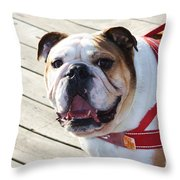 Beautiful Pug. Throw Pillow