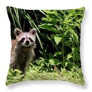 Beautiful Racoon Throw Pillow