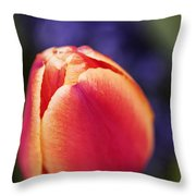 Beautiful Red And Orange Colored Tulip  Throw Pillow