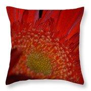 Beautiful Red Throw Pillow