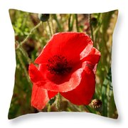 Beautiful Red Poppy Throw Pillow