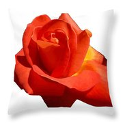 Beautiful Red Rose Photograph Vector Throw Pillow