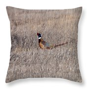 Beautiful Rooster Pheasant  Throw Pillow