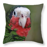 Beautiful Ruffled Green Feathers On A Conure Throw Pillow