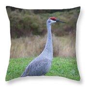 Beautiful Sandhill Crane Throw Pillow