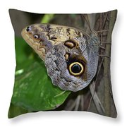 Beautiful Shot Of A Brown Morpho Butterfly Resting  Throw Pillow