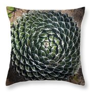 Beautiful Spiked Ball Plant Throw Pillow