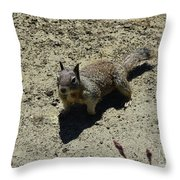 Beautiful Squirrel Standing In A Sandy Area In California Throw Pillow